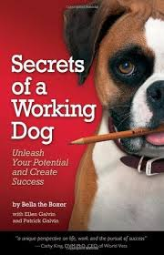boxer dog gum problems 10 best boxer dog books to read images on pinterest boxers dog