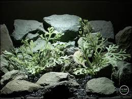 hand designed reptile terrarium plants from ron beck designs