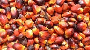 Minyak Kelapa Sawit Terkini stok menipis dongkrak harga minyak kelapa sawit di