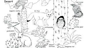 desert owl coloring page saguaro cactus blossom coloring page printable coloring desert