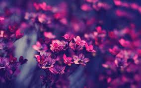 Cute Flower Wallpapers - beautiful flower wallpaper qygjxz