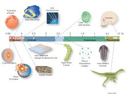 Geologic Time Scale Worksheet Pindex