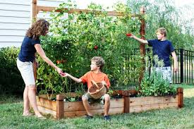 how to start a backyard farm image with excellent backyard farming