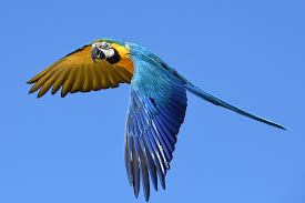 Bird Wing - free photo parrot blue macaw fly bird wing free image on