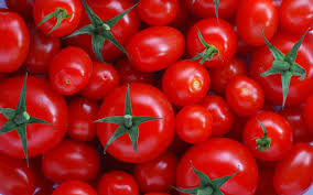 fresh tomatoes wallpapers images wallpapers fresh tomatoes in