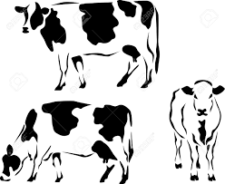 dairy cow clipart clipartxtras