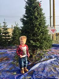 just say no to fake christmas trees clark griswold lives here