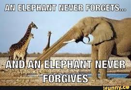 Elephant Meme - an elephant never forgets funny meme image