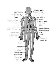 Human Figure Anatomy Human Body Archives Page 30 Of 60 Human Anatomy Chart
