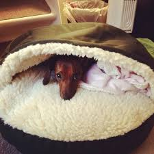 Cute Puppy Beds Dachshund Bed Snoozer Cozy Cave Pet Bed Perfect For Mamas Dog And
