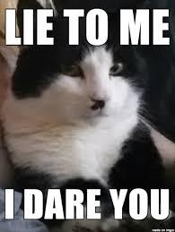 Mad Cat Memes - mad funny kitty meme on imgur