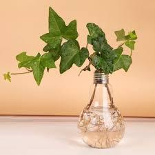 Flower Light Bulbs - 4pcs set light bulb glass flower vase desktop bulbs water culturer