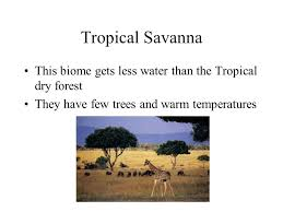 Tropical Savanna Dominant Plants - biome an area with a distinct climate and specific types of plants