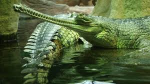 images about crocodiles on pinterest sketchbooks how to 1920 1200