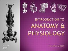 Anatomy And Physiology Introduction To The Human Body Introduction To Human Anatomy