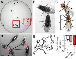 the neurogenetics of group behavior in drosophila melanogaster