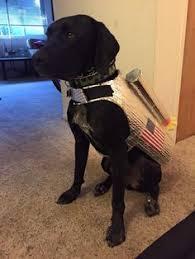 Dog Costume Halloween Grover Space Shuttle Astronaut Dog Halloween Dog Costume