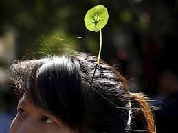 china u0027s obsession with plant and flower hair clips business insider