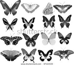 illustration grey butterflies collection isolated on stock vector