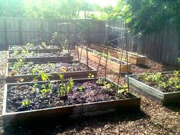 the ultimate backyard edible raised bed sheet mulch makeover in