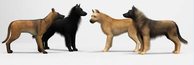 belgian sheepdog georgia mod the sims sims 3 pets pictures