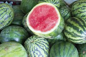 Yellow Watermelon Fruit U2013 What To Do For Watermelons Turning Yellow