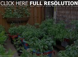 how to grow a vegetable garden in texas home outdoor decoration