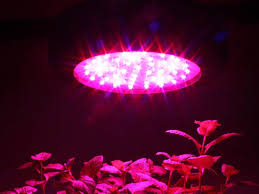 horticultural led grow lights apollo horticulture gl60 led grow light review the wheel of light