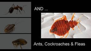 lights out bed bug killer questspecialty lights out biopesticide bed bug killer youtube