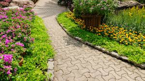 Landscaping Albuquerque Nm by Tree Trimming U0026 Removal Services In Albuquerque Nm