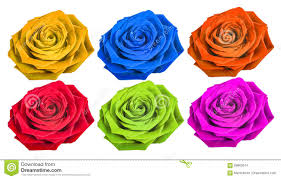 different color roses different color isolated on white background stock photo