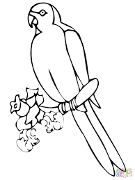 perched lorikeet coloring page free printable coloring pages