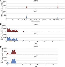 whole genome sequencing to identify mutants and polymorphisms in