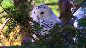 white owl 2 wallpapers bird wallpapers page 294 colorful rain friends little colors