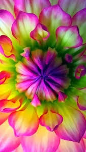 Awesome Looking Flowers 10 Wonderful And Cheap Diy Idea For Your Garden 2 True Colors