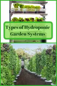 Hydroponics Vegetable Gardening by 19 Best Lady Banks Rose Images On Pinterest Climbing Roses