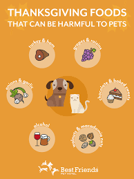 thanksgiving pet safety best friends pet care the dish