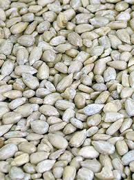 sunflower seeds as bird food boston seeds