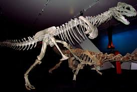 majungasaurus wikipedia