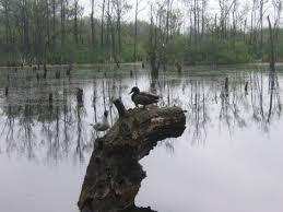 file kolobrzeg ekopark wschodni birds 2007 05 jpg wikimedia commons