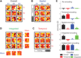 human premotor areas parse sequences into their spatial and