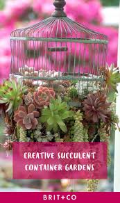 succulent container gardens plants home outdoor decoration
