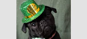 17 dogs who are totally ready for st patrick u0027s day fabdog