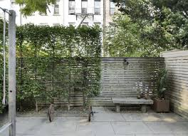 Create Privacy In Backyard Ask The Expert How To Use Plants For Privacy In A City Garden
