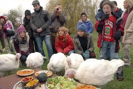 organic thanksgiving turkey consider the turkey u2013 advocacy for animals