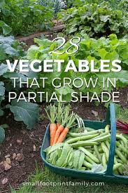 what to grow in a vegetable garden 28 vegetables that grow in partial shade yards gardens and