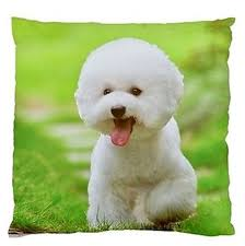 bichon frise cute compare prices on bichon frise gifts online shopping buy low