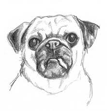 dogs drawings group 68