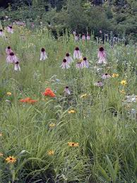 native plants of ontario maintaining native landscapes door county pulse
