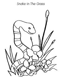 snake grass coloring pages color luna